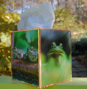 frogboy-tissue-box1